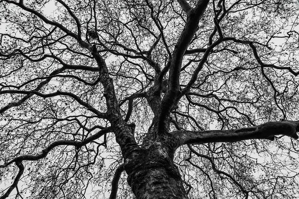 Tree, Branches, Nature, Winter, Naked Tree