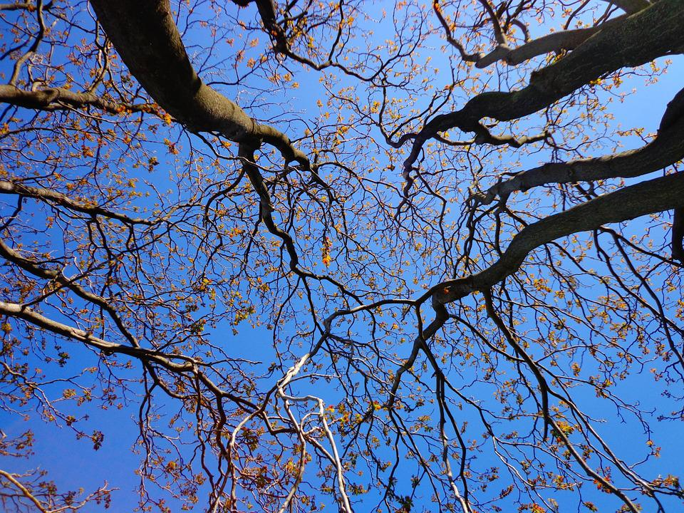 Tree, Branches, Spring, Nature, Sky, Blue