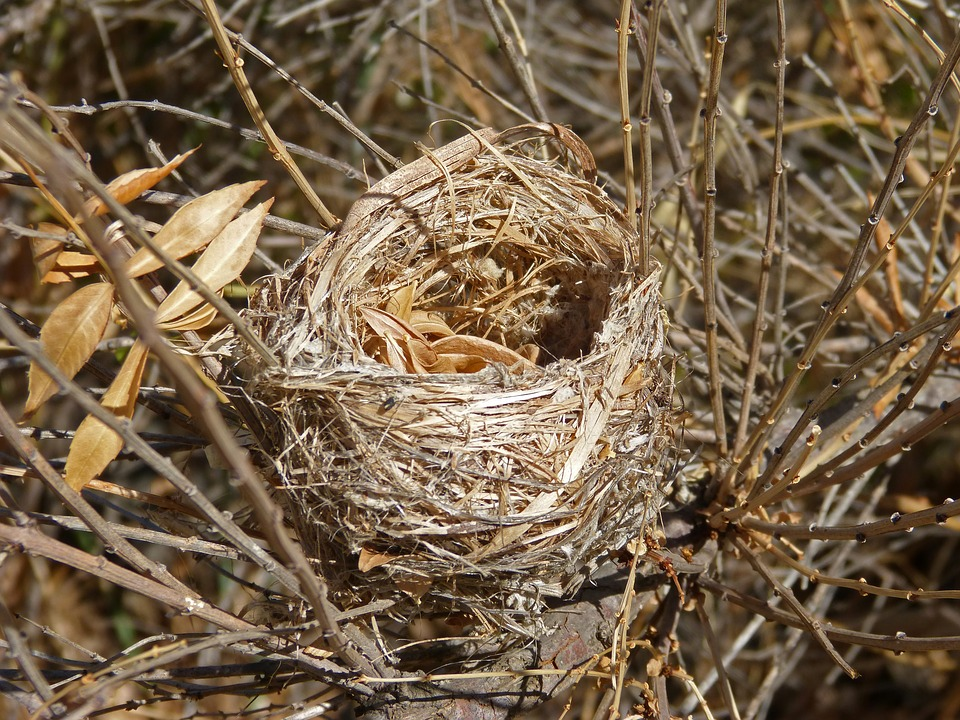 Nest, Birds, Make A Nest, Branches