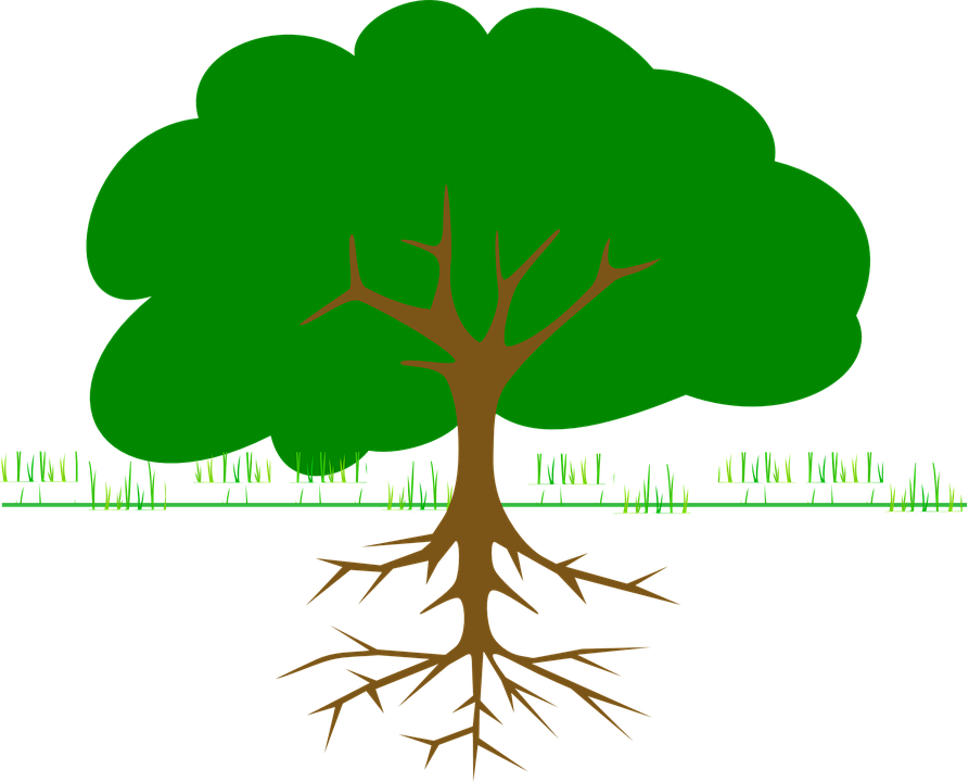Tree, Branches, Roots, Ecology, Bio, Organic, Grow