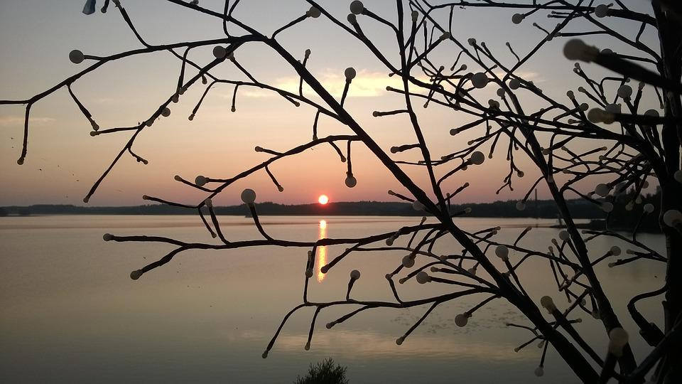 Morning, Atmosphere, Lake, Sunrise, Branches