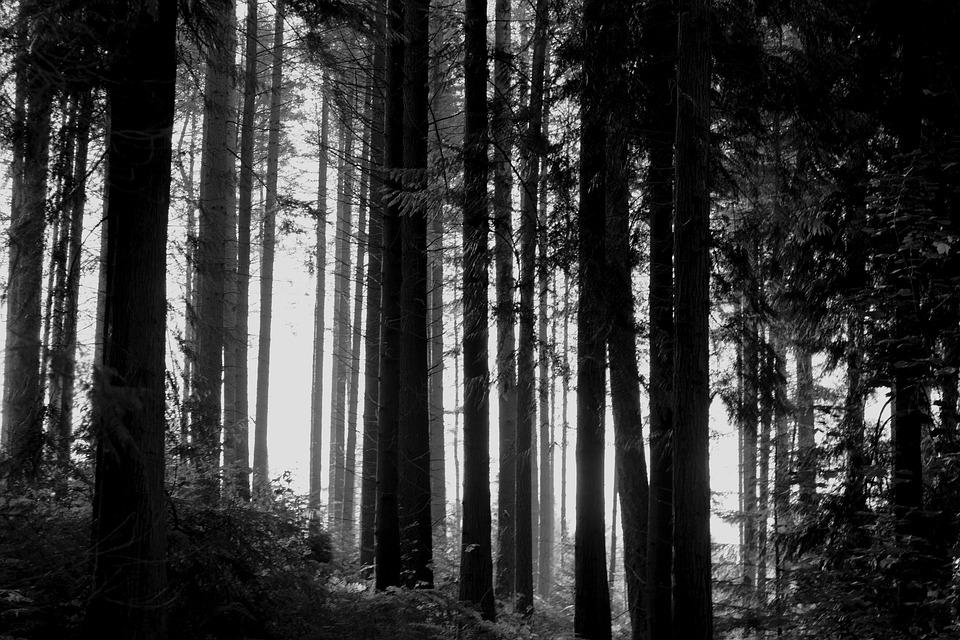 Woods, Forest, Trees, Trunks, Branches, Leaves