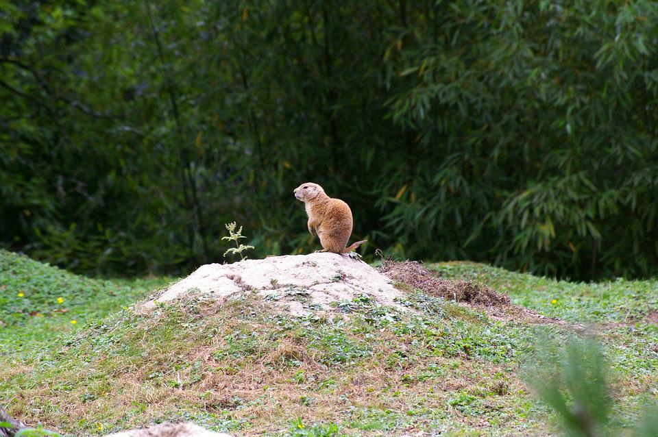 Branféré, Visit, Family, Wild, Pond, Fauna, Animal