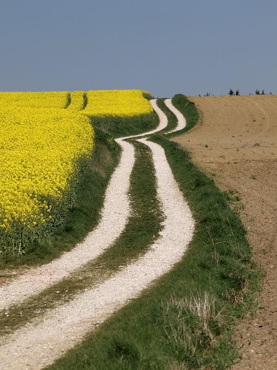 Brassica Napus Field, Rapsfeld, Agriculture, Bio-energy