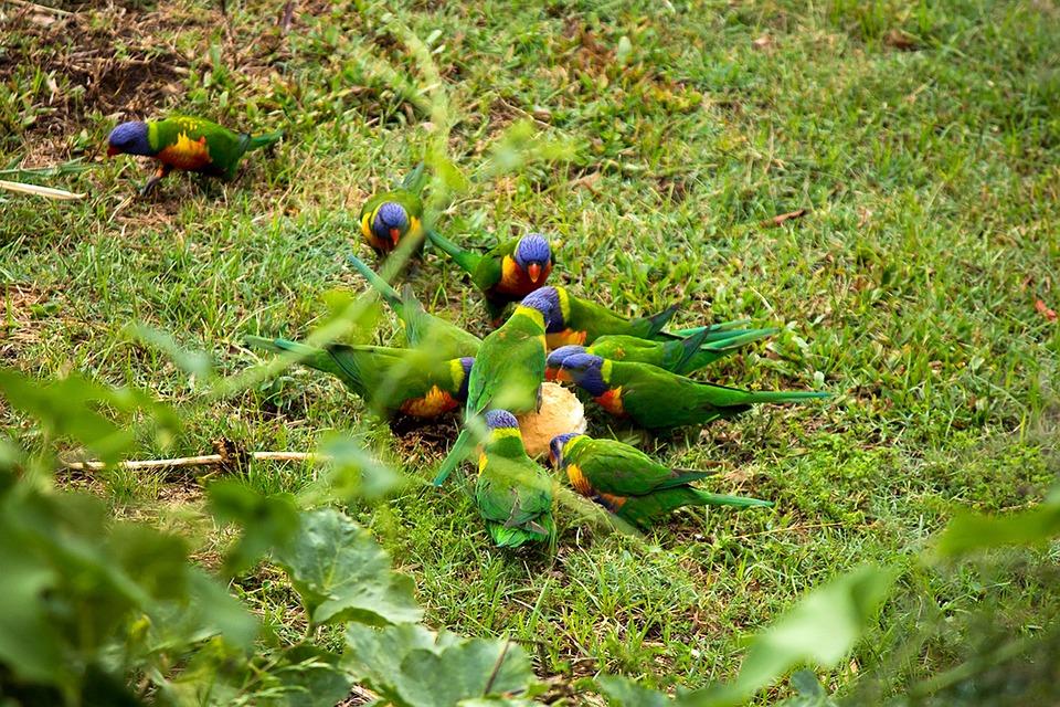 Bird, Rainbow, Parrot, Bread, Flight, Colourful, Animal