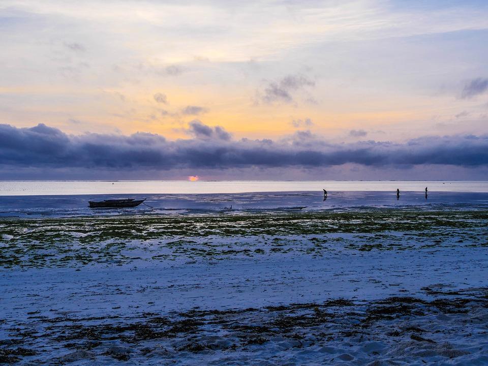 Shell Seekers, Breakfast, Sunrise, Nature, Sky, Sea