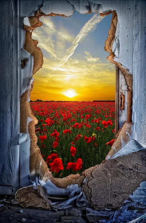 Door, Breakthrough, Door Sunburst, Poppy, Poppies