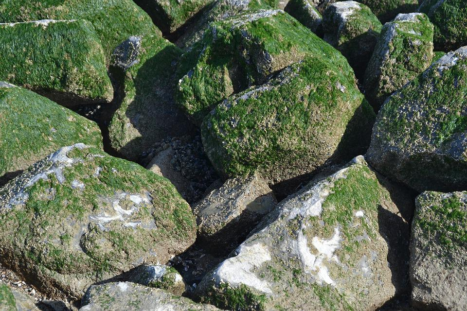 Breakwater, Texture, Pierre, Alga, Sea