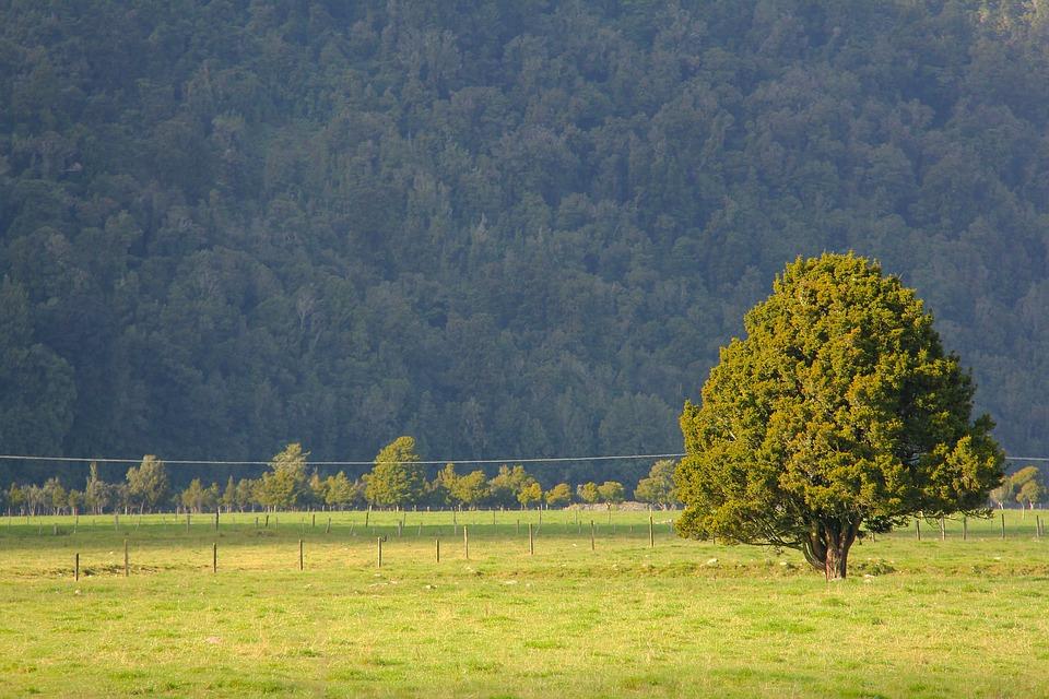 Greenery, Scenery, Green, Tree, Field, Breathtaking