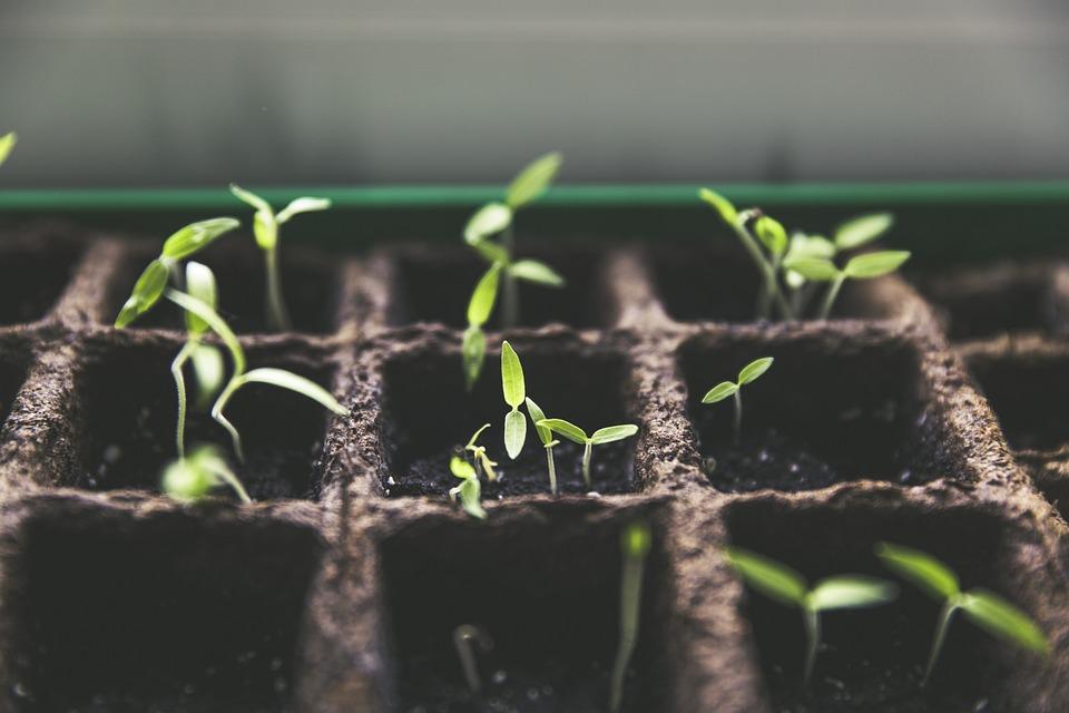 Plant, Breeding, Tomato Fruit, Garden, Home Garden