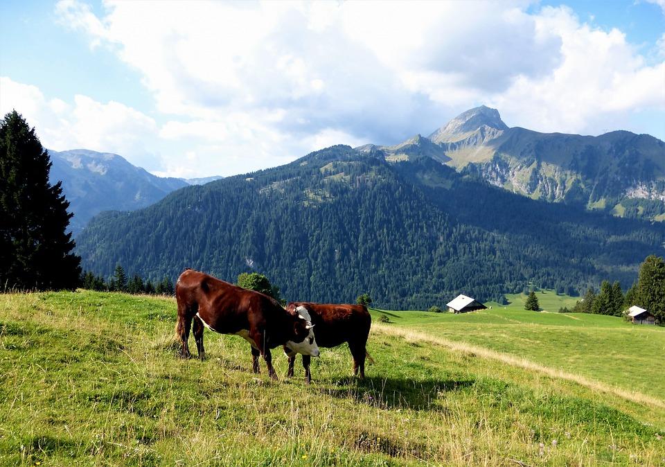 Nature, France, Alps, Breeding, Livestock, Prairie