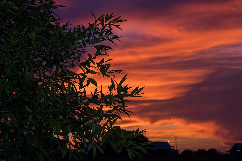 Vibrant, Sunset, Leaves, Evening, Breeze, Scenic