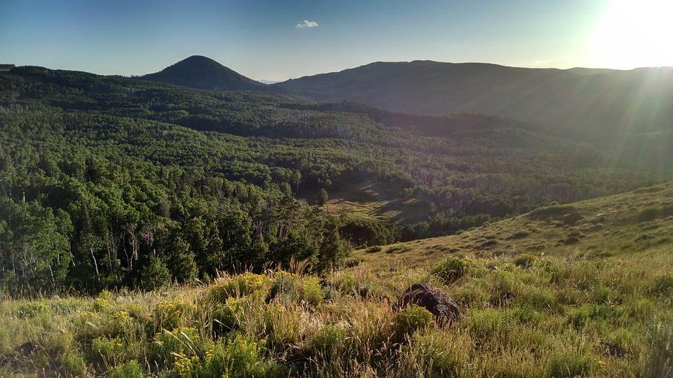 Utah, Brianhead, Mountain, Forest, Meadow, Field