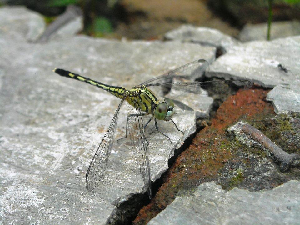 Dragonfly, Green, Hiitam, Floor, Cement, Brick