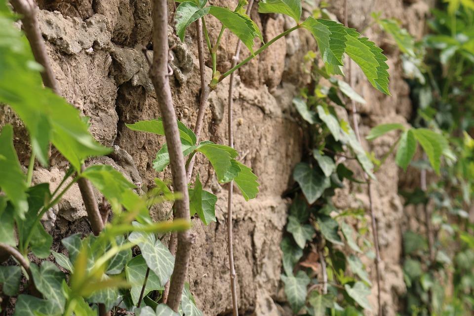 Brick, Green, Leaf, Old, Plants, Rustic, Wall