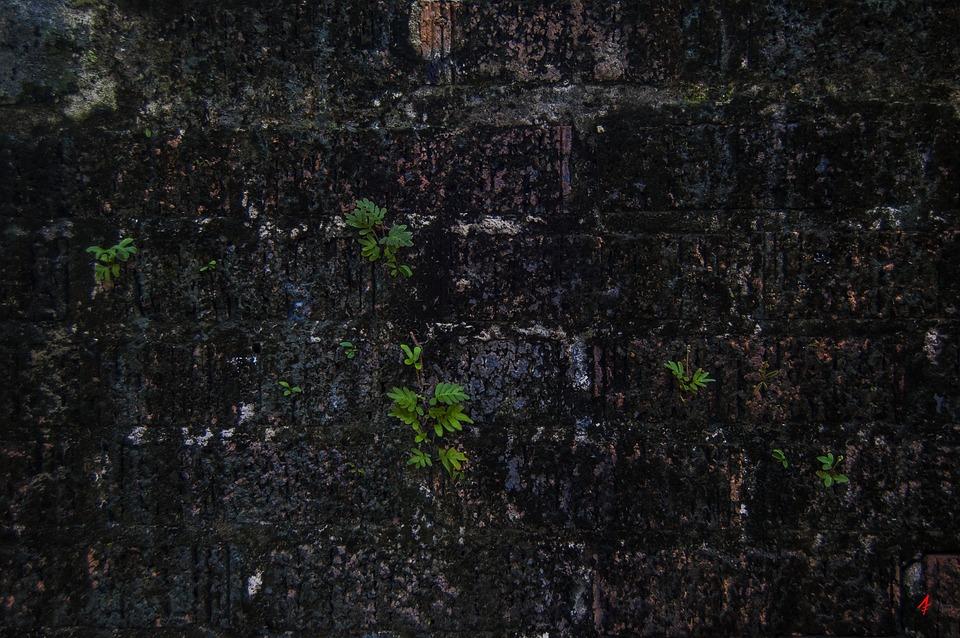 Brick Wall, Algae, Wall, Old, Brick, Texture, Pattern