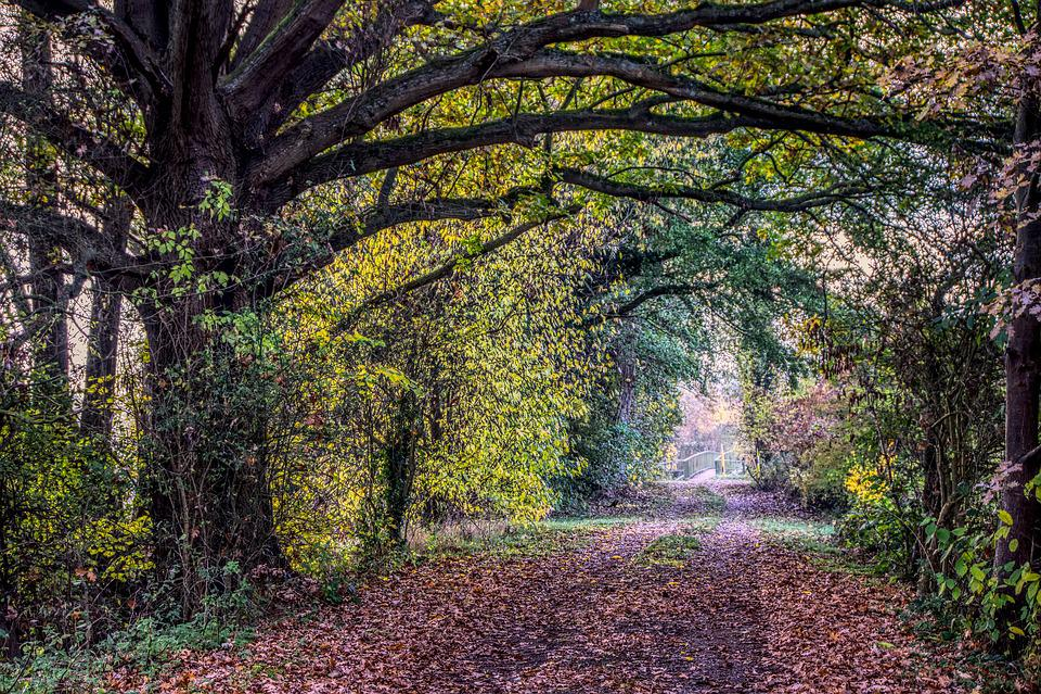 Forest Path, Road, Avenue, Bridge, Leaves, Autumn, Tree