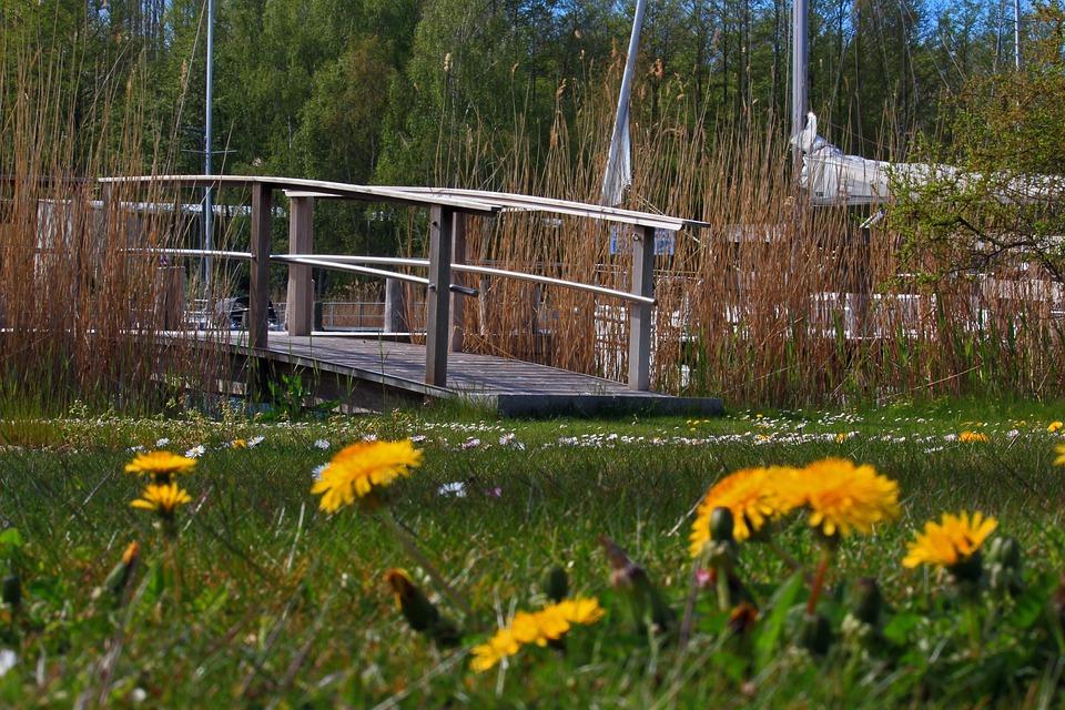 Meadow, Buttercup, Daisy, Bridge, Flower Meadow, Nature