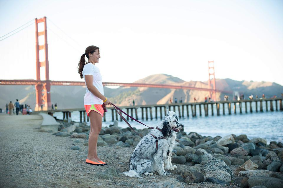 San Francisco, Bay Area, Bridge, Dogs, California