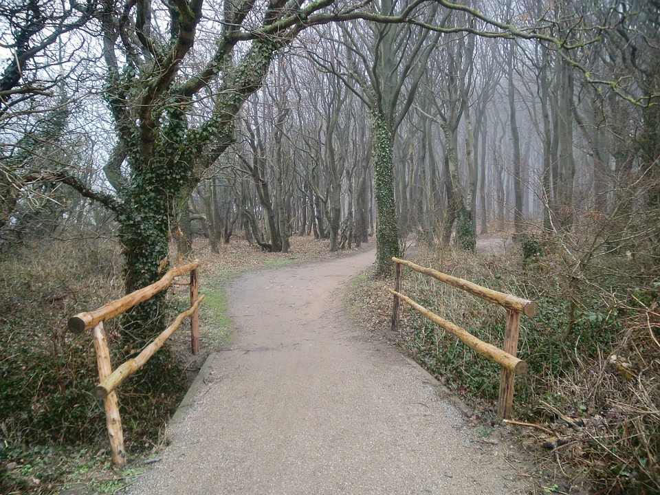 Nature, On The Go, Forest, Bridge, Forest Path, Idyll