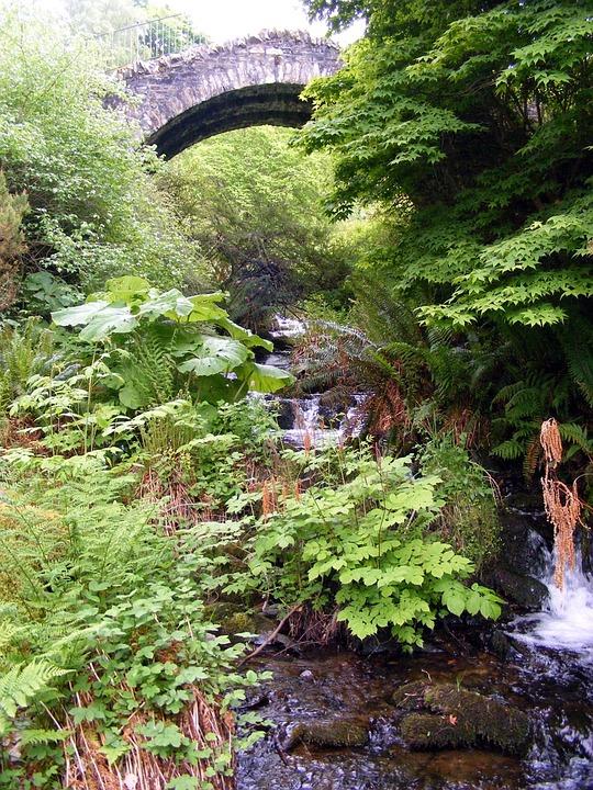 Ferns, Bridge, Vegetation, Landscape, Sky, Stone