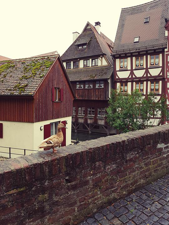 Truss, Duck, Bridge, Wall, Ulm, Fishermen's Quarter