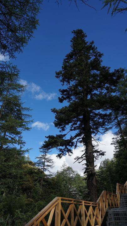Forest, Tree, Wood, Woods, Virgin Forest, Bridge