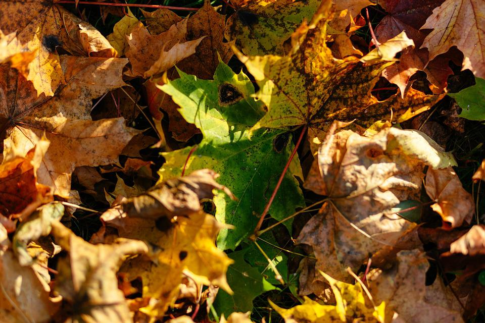 Nature, Abstract, Autumn, Background, Bright, Brown