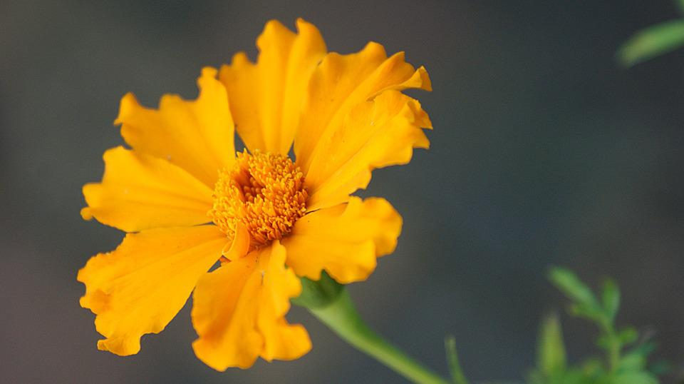 Flower, Autumn, Flora, Bloom, Bright, Vegetable, Beauty