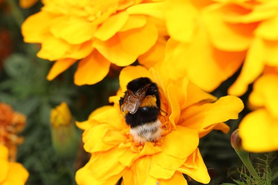 Flowers, Bumblebee, Bright, Yellow, Nature, Garden