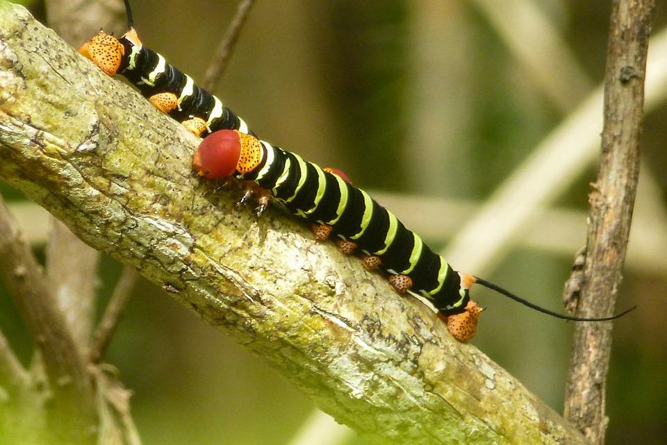 Caterpillar, Branch, Close, Black, Yellow, Bright
