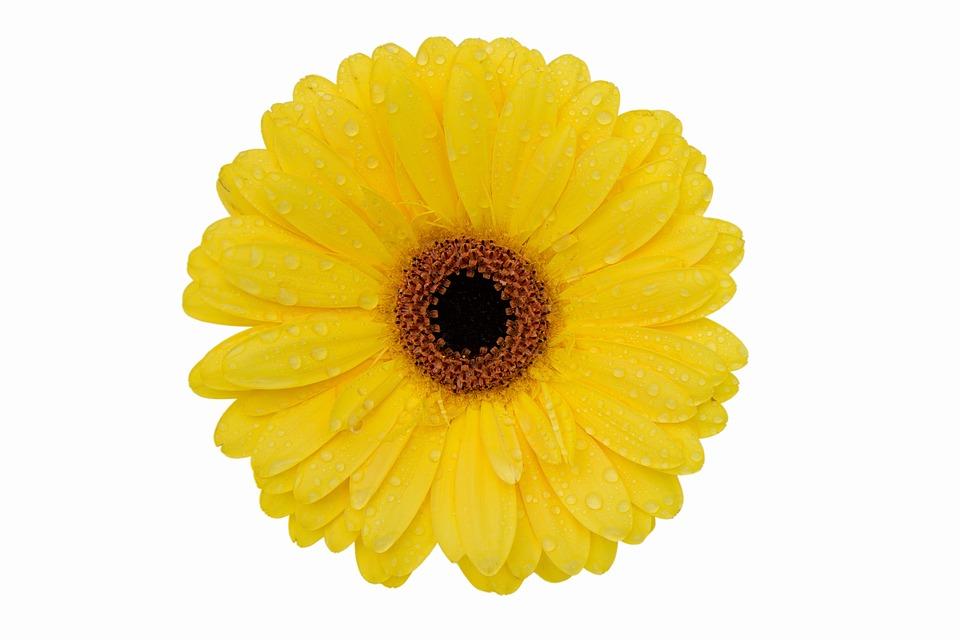 Gerbera Flower, Nature, Bright, Summer, Desktop, Color