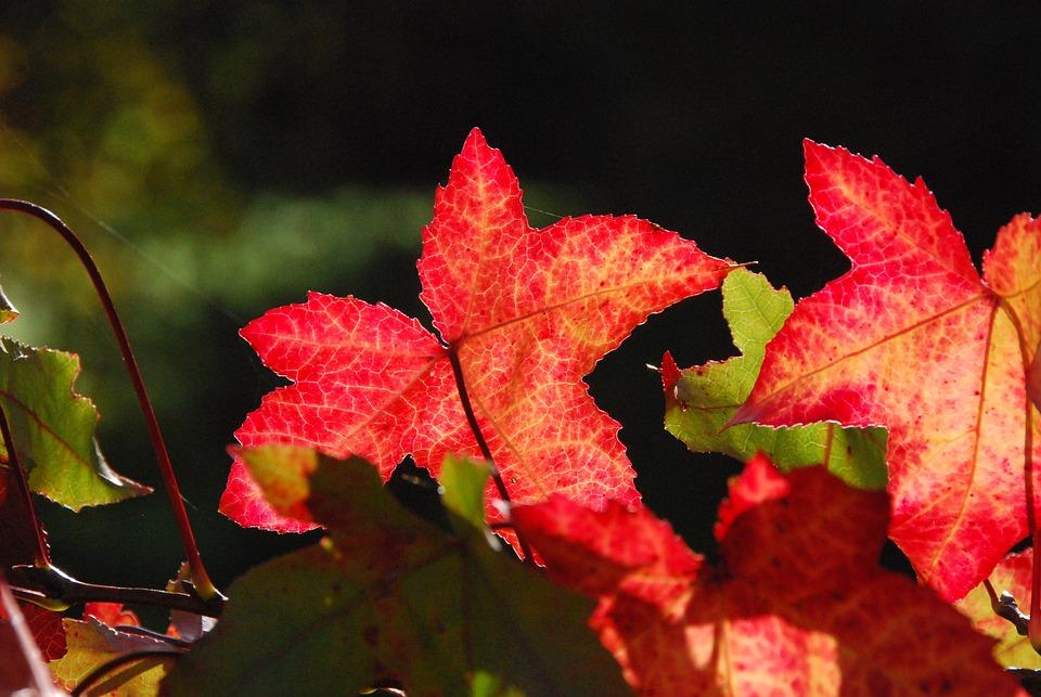 Autumn, Colorful, Bright, Golden Autumn, Fall Foliage