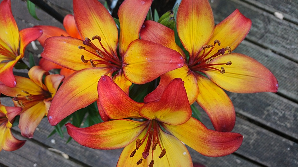 ab87136a0bb19 Free photo Bright Flame Flower Lilly Yellow Beautiful Orange - Max Pixel