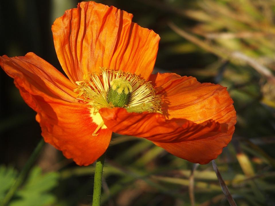 Flower, Nature, Bright