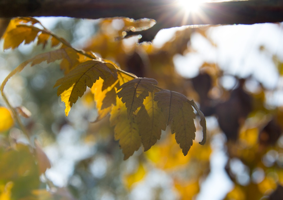 Leaf, Nature, Autumn, Forest, Landscape, Bright