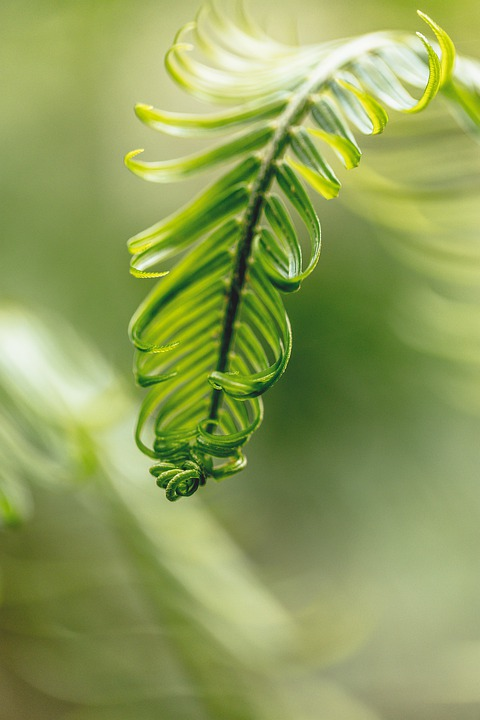 Leaf, Plant, Natural, Green, Environment, Macro, Bright