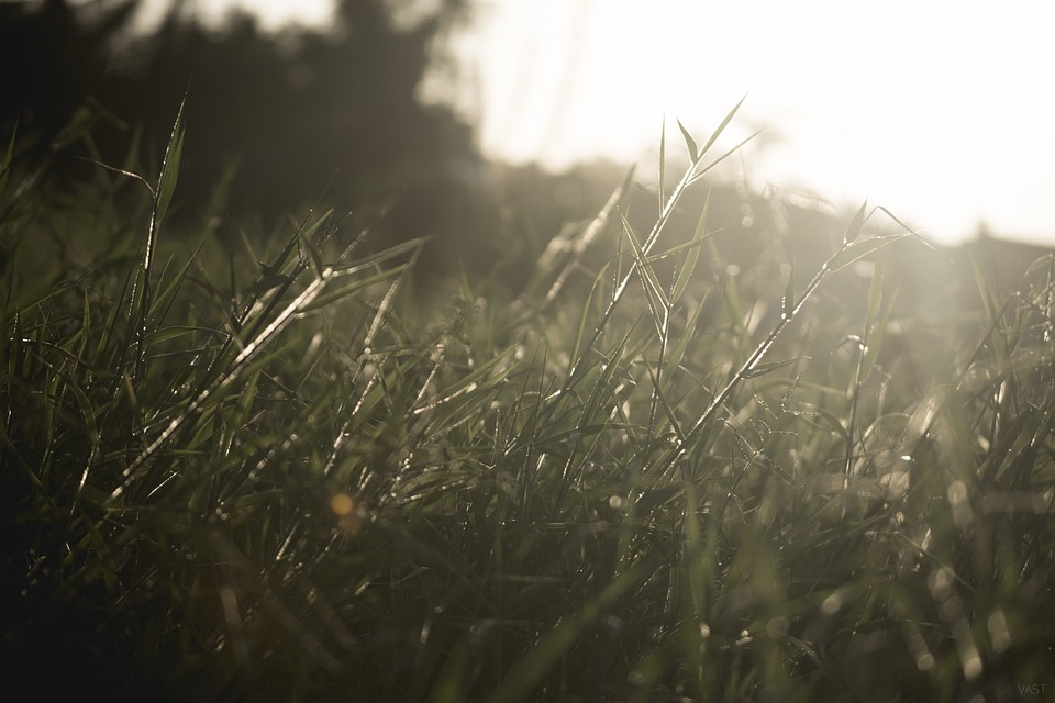 Grass, Green, Winf, Nature, Plant, Bright, Sunlight