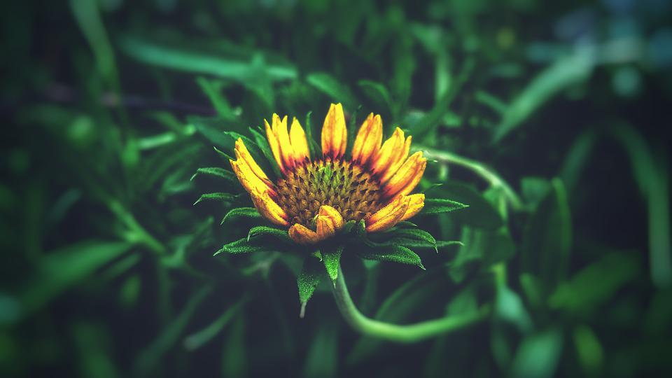 Nature, Summer, Flora, Flower, Leaf, Garden, Bright