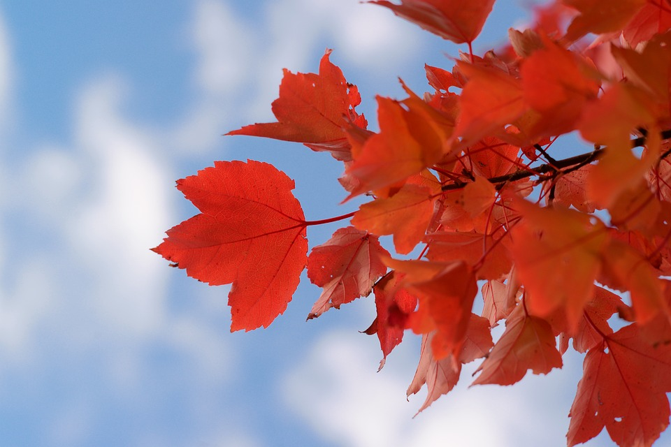 Red, Leaf, Leaves, Nature, Autumn, Bright, Color