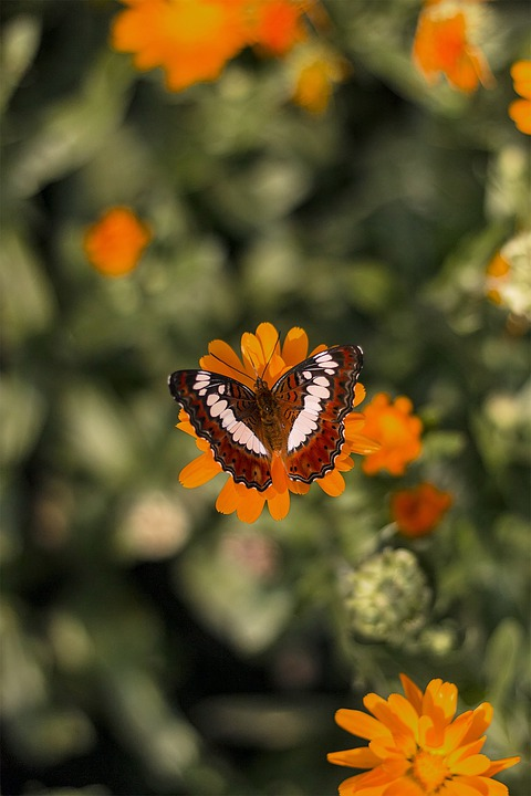 Butterfly, Insect, Wing, Wildlife, Bug, Bright, Small