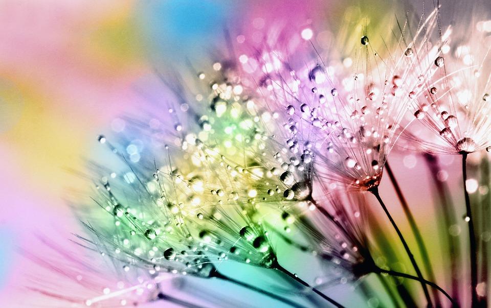 Flora, Nature, Summer, Bright, Dandelion, Blowball