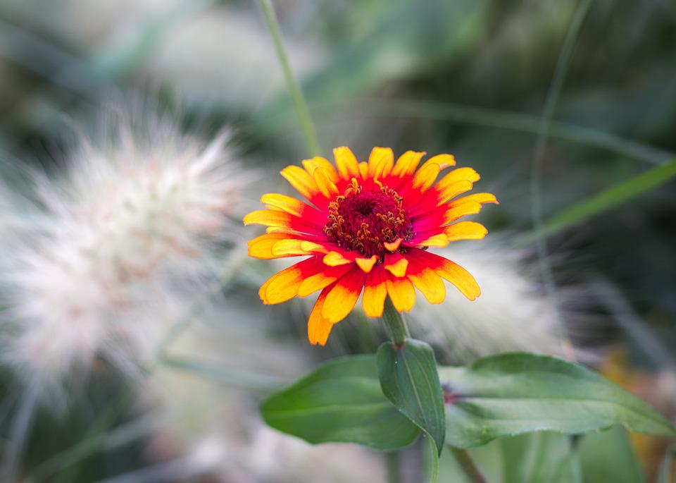 Summer Flower, Blossom, Bloom, Flower, Bright, Yellow