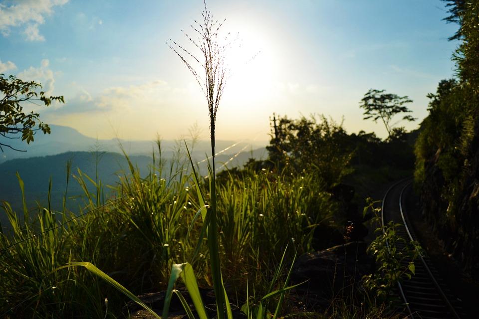 Sun Set, Plant, Nature, Grass, Trees, Sun, Bright, Sky