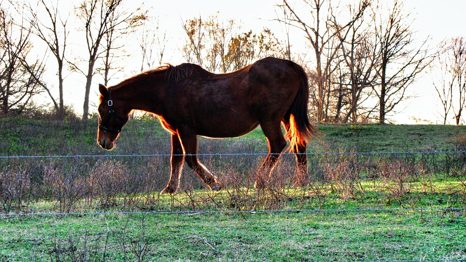 Horse, Brown, Animal, Mammal, Farm, Sunlight, Bright