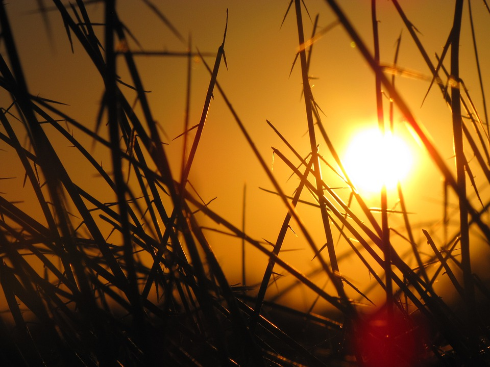 Sunset, Sunshine, Silhouette, Grasses, Plants, Bright
