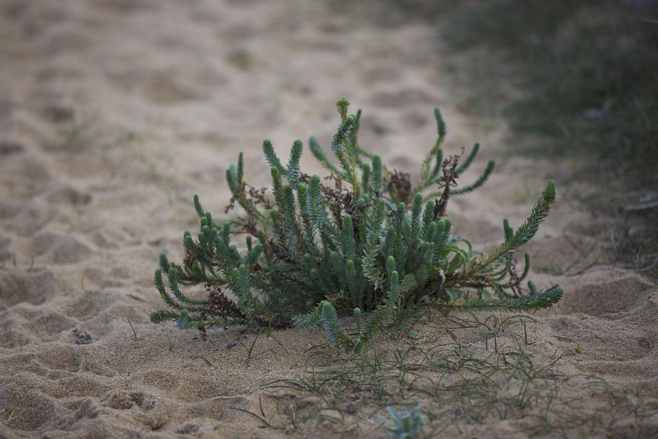 Plant, Sand, Plant Sea, Brittany, Marine, Beach, France