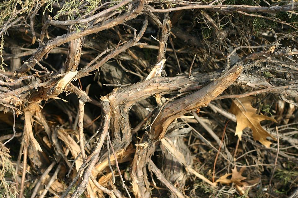 Bush, Broken, Winter, Plant