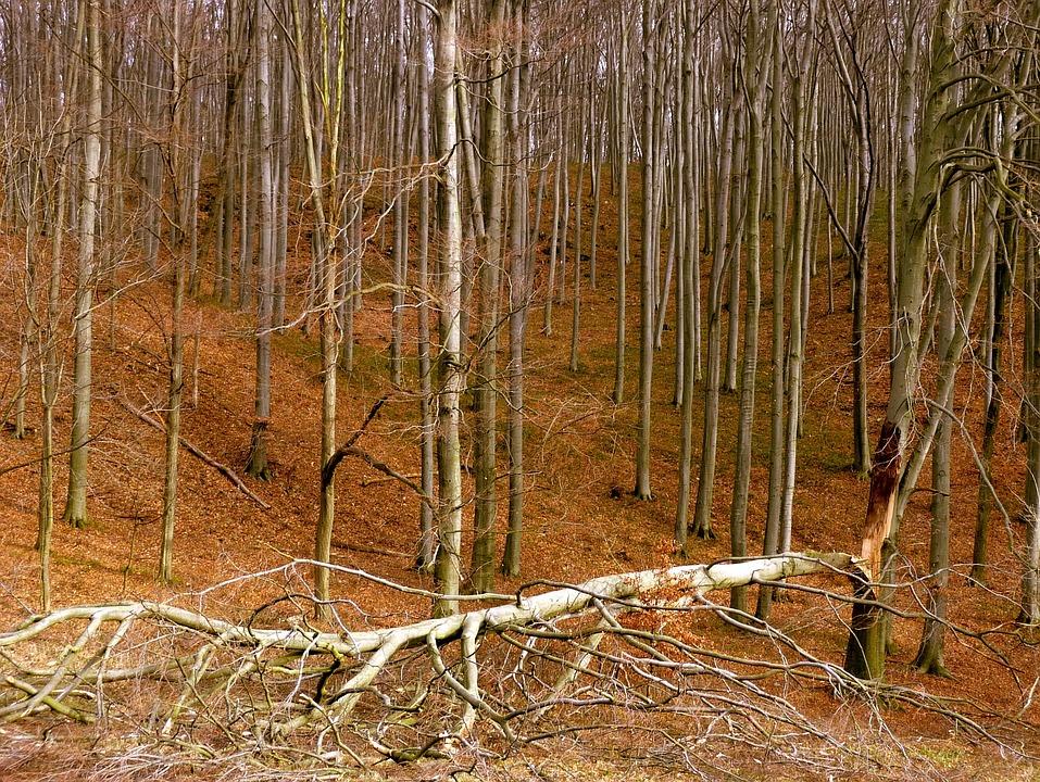 Wood, Broken, Forest, Storm, Bakony, Bough