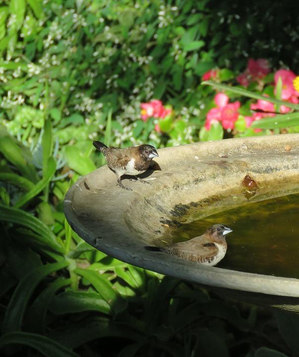 Birds, Mannequin, Bronze Mannequin, Birdbath